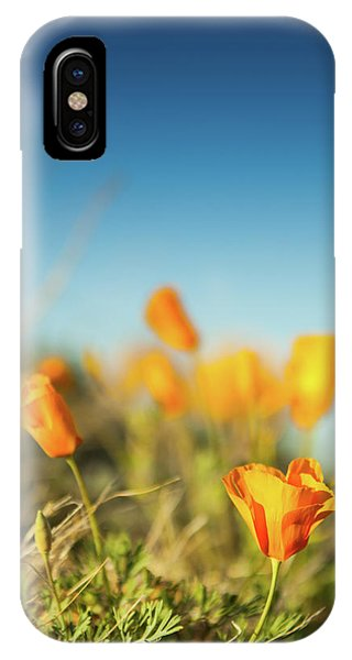 El Paso Poppies IPhone Case