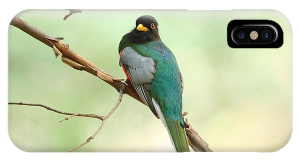 Elegant Trogon At Chiricahuas'  South Fork IPhone Case