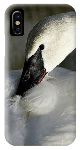 Elegant Trumpeter Swan IPhone Case
