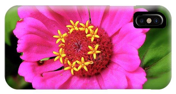 Elegant Zinnia Flower Pink Tones IPhone Case