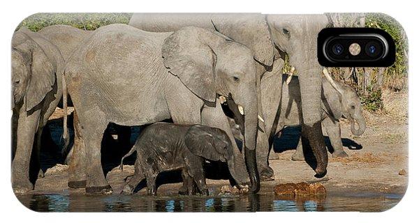 Elephant 3 IPhone Case