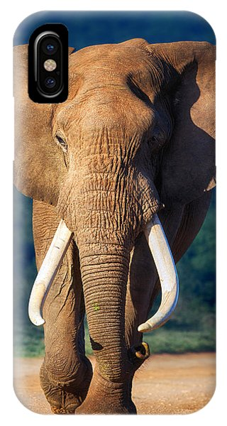 Bull iPhone Case - Elephant Approaching by Johan Swanepoel