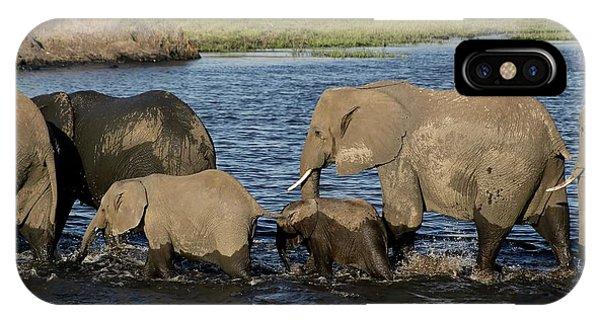 Elephant Crossing IPhone Case
