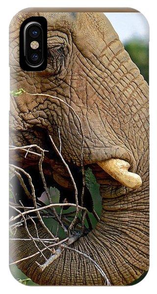 Elephant Curl IPhone Case