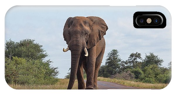 Elephant In Kruger IPhone Case
