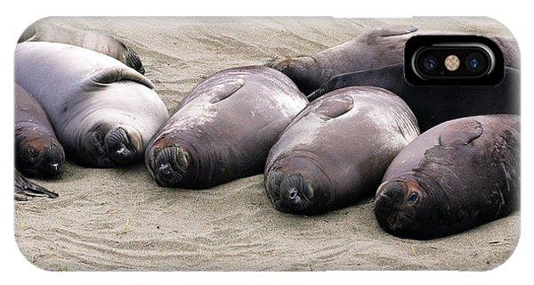 Elephant Seals IPhone Case