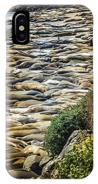 Elephant Seals Pierdras Blancas IPhone Case