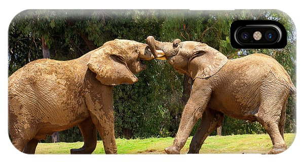 Elephants At Play 2 IPhone Case