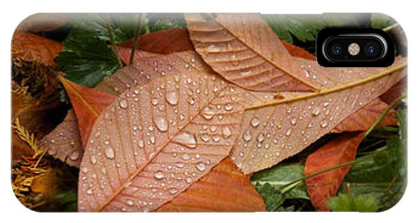 Elevated View Of Raindrops On Leaves IPhone Case