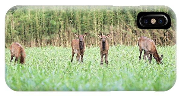 Elk Calves IPhone Case