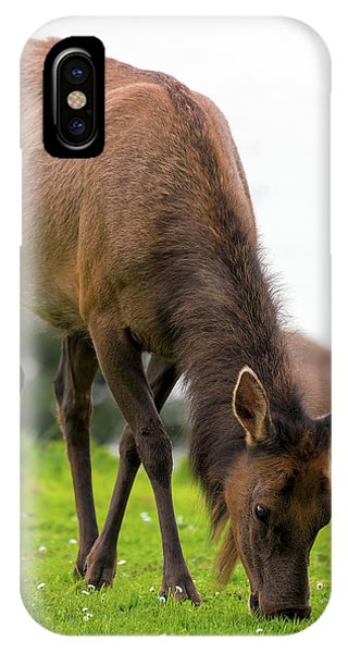iPhone Case - Elk Grazing On Green Pasture Closeup by David Gn