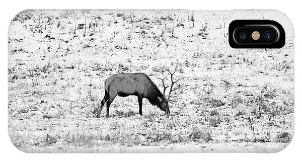 Elk In Black And White - Estes Park IPhone Case