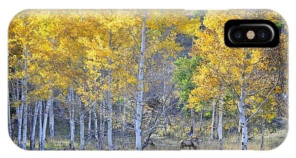 Elk In Rmnp Colorado IPhone Case