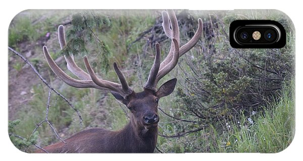 Bull Elk Rmnp Co IPhone Case