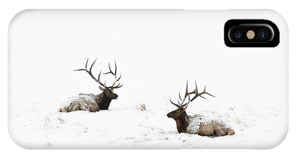 Elk Laying In A Snow Covered Meadow - 9069 IPhone Case