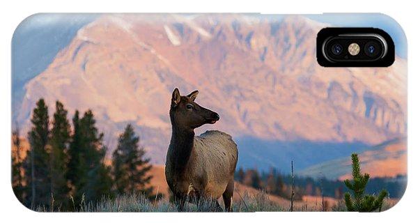Elk Majesty IPhone Case