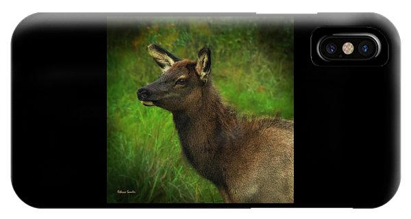 Elk Of Benezette IPhone Case