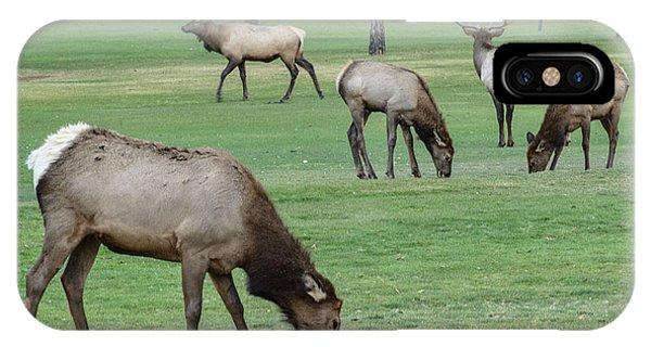 Elk On Golf Course Estes Park Colorado IPhone Case