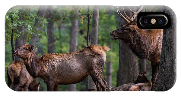 Elk Romance IPhone Case