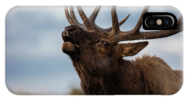 Beautiful Sunrise iPhone Case - Elk's Screem by Edgars Erglis