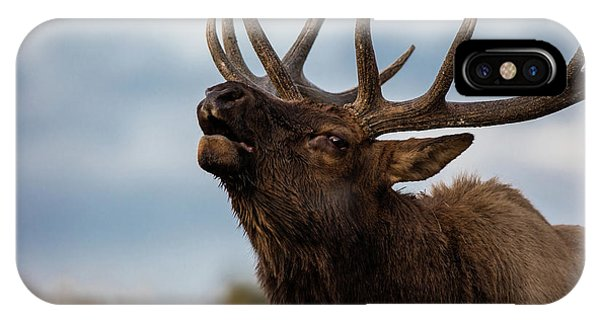 Teton iPhone Case - Elk's Screem by Edgars Erglis