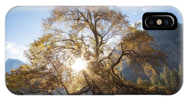 Elm Tree  IPhone Case