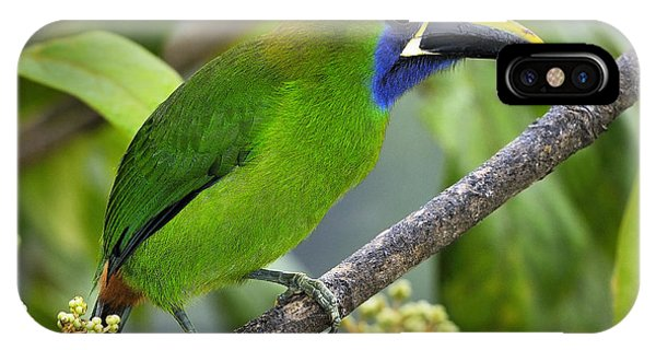 Emerald Toucanet IPhone Case