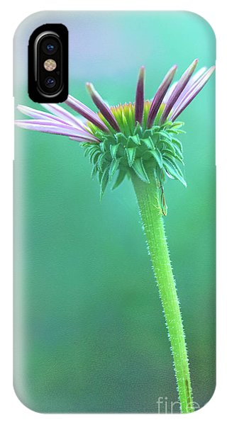Emerging Purple Conefower Reaching For The Sky IPhone Case