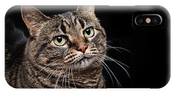 Emmy The Cat Ponder IPhone Case