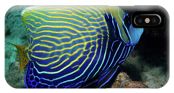 Emperor Angelfish, Red Sea 1 IPhone Case