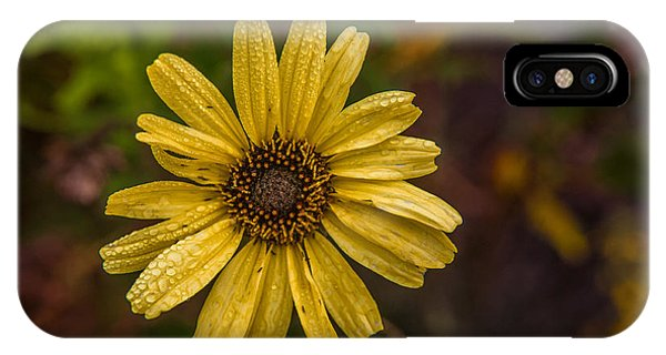 Encelia  IPhone Case