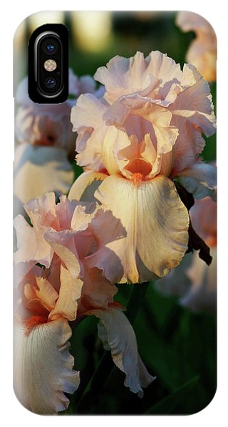 End Of Day Pink Irises 6702 H_2 IPhone Case