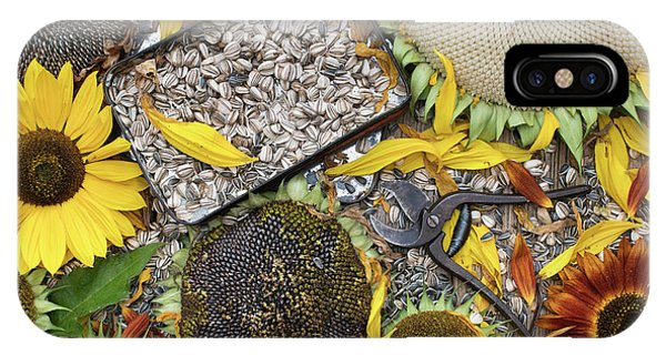 Sunflower Seeds iPhone Case - End Of Season by Tim Gainey