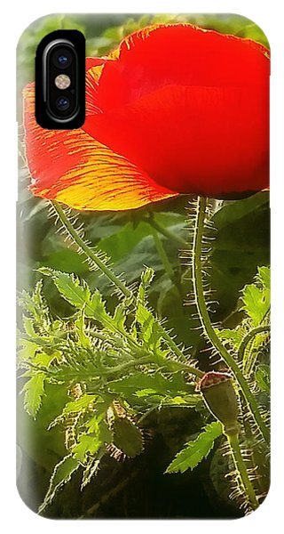 Red Poppy At Sunset IPhone Case