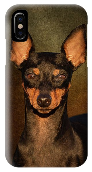 English Toy Terrier IPhone Case