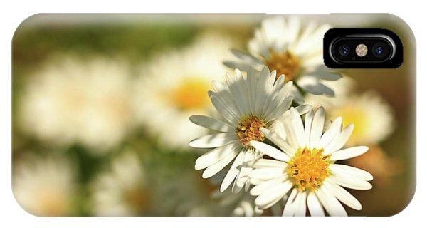 Erigeron Annuus Daisy Like Wildflower IPhone Case