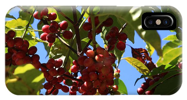 Ethiopian Coffee Beans IPhone Case