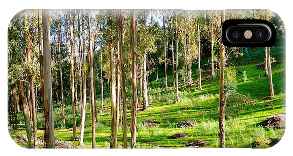 Eucalyptus IPhone Case