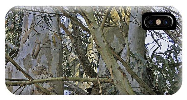 Eucalyptus Study IPhone Case