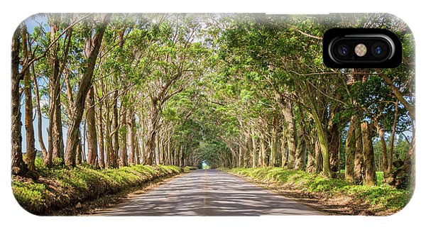 Famous Artist iPhone Case - Eucalyptus Tree Tunnel - Kauai Hawaii by Brian Harig