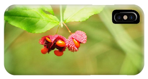 Euonymus Americanus  American Strawberry Bush IPhone Case