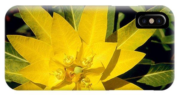 Golden Gardens iPhone Case - Euphorbia Wallichii by American School