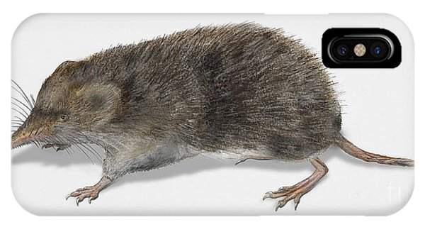 Eurasian Common Shrew Sorex Araneus - Musaraigne Carrelet - Musa IPhone Case