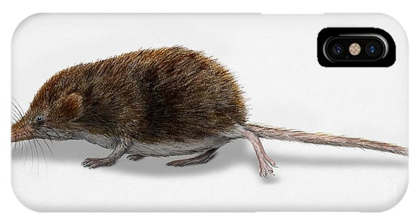 Eurasian Pygmy Shrew - Sorex Minutus - Musaraigne Pygmee - Musar IPhone Case