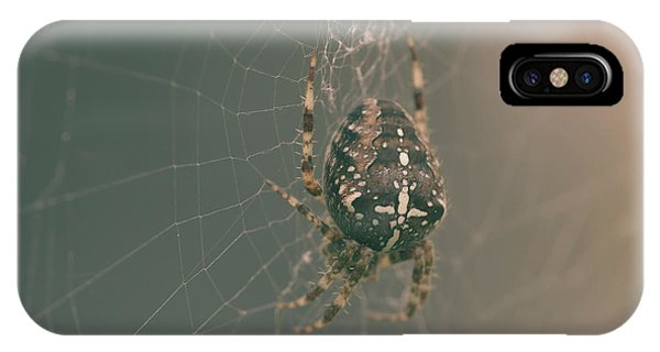 European Garden Spider B IPhone Case