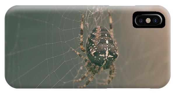 European Garden Spider B IPhone Case