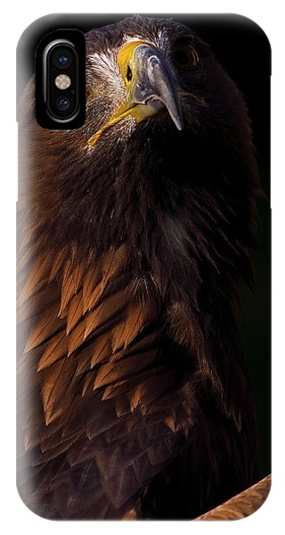 European Golden Eagle IPhone Case