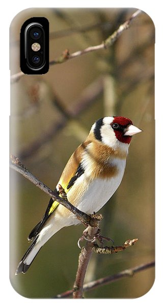European Goldfinch 2 IPhone Case