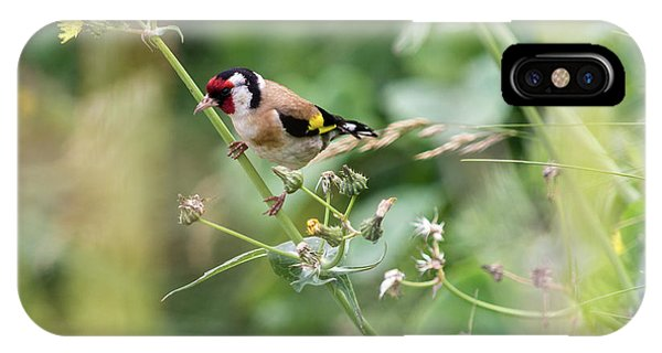 European Goldfinch Perched On Flower Stem B IPhone Case