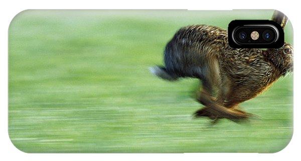 European Hare Lepus Europaeus Running IPhone Case